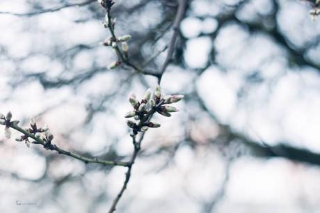 florecer_amvelandia